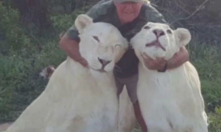 Man mauled to death by two beloved white lions in horror attack while playfighting in South Africa